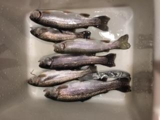 12-15-2018 fish.JPG